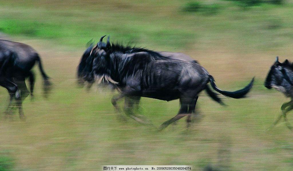 马群 马 野马 生物世界 野生动物 摄影图库 72dpi jpg