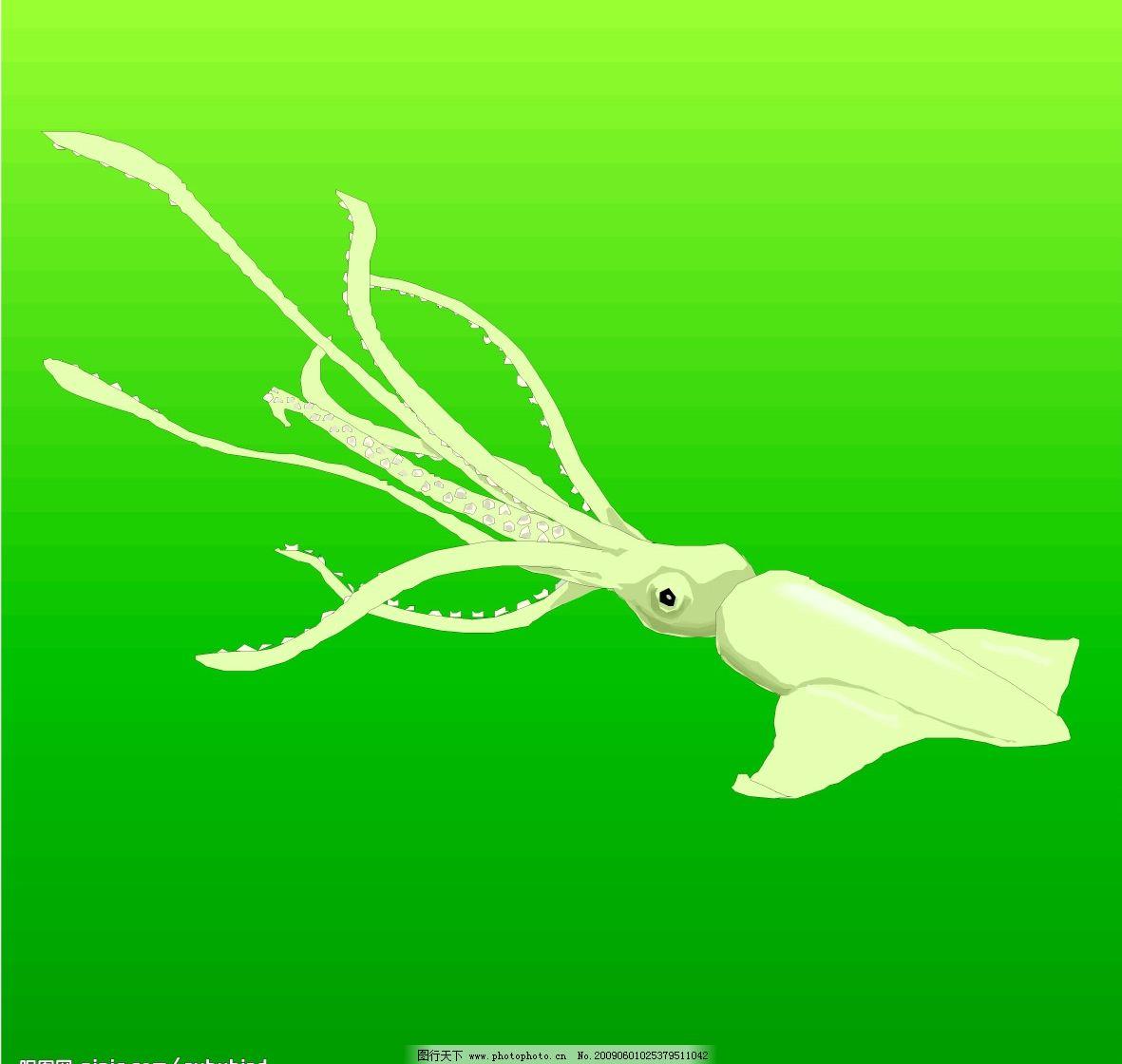 乌贼 墨鱼 生物世界 海洋生物