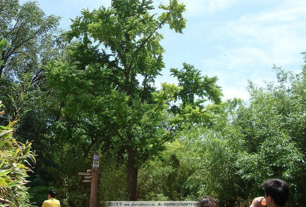 风景 树 竹子 天空 风景图 北京动物园 自然景观 自然风景 摄影图库