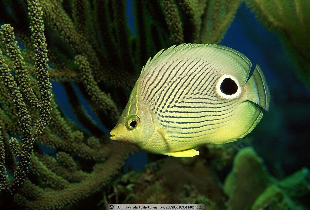鱼类 海洋生物 海底世界 生物系 生物学 探索海底 海水 海洋素材 桌面