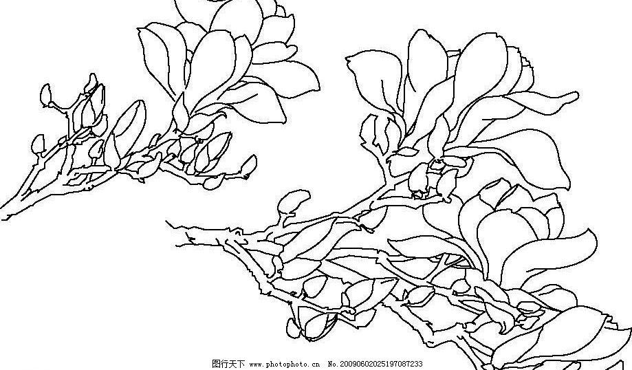 白玉兰矢量工笔线描图片