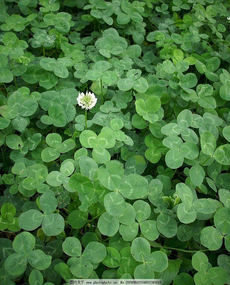绿叶小花 绿 叶 小 花 自然景观 自然风景 摄影图库 96dpi jpg