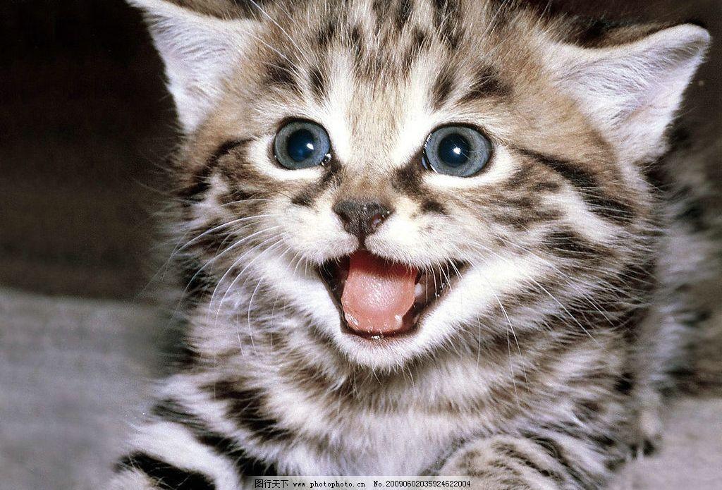 小猫咪 可爱小猫咪 其他 图片素材 摄影图库 72dpi jpg 生物世界 家禽