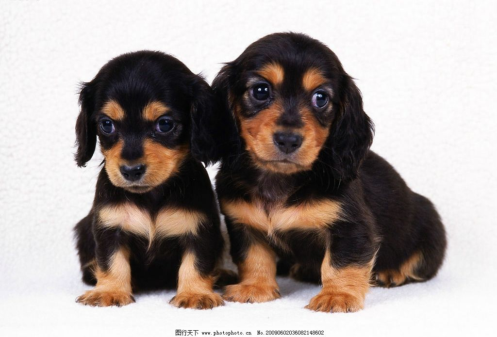 两个小可爱 狗狗 可爱 桌面 生物世界 其他生物 摄影图库 350dpi jpg