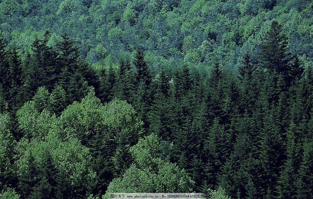 树木 树林 森林 自然景观 山水风景 摄影图库