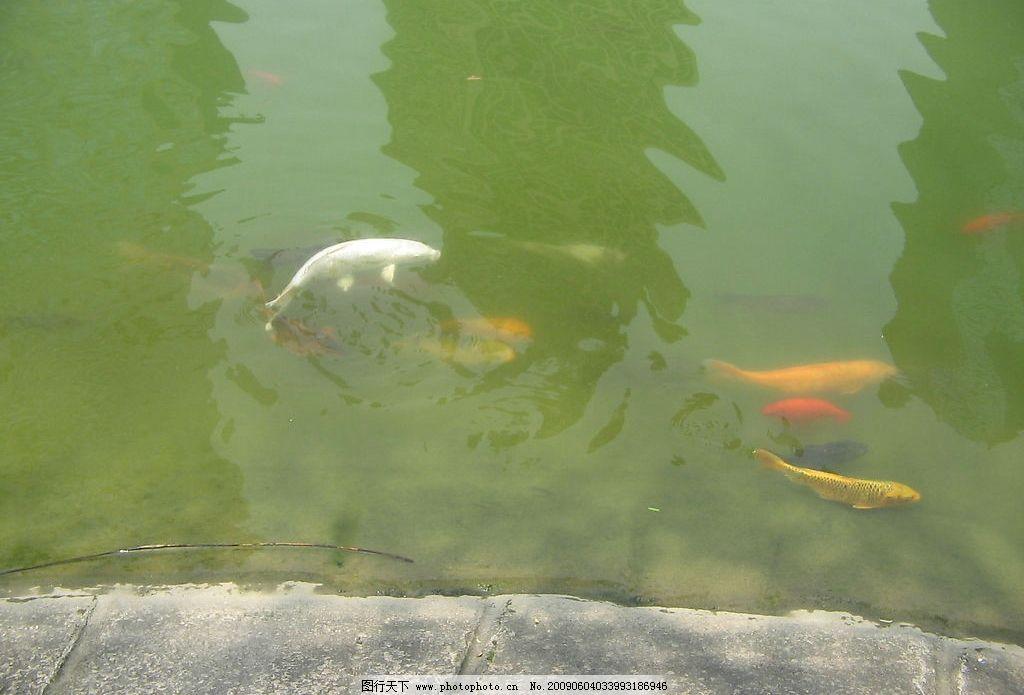 水中变异动物大全