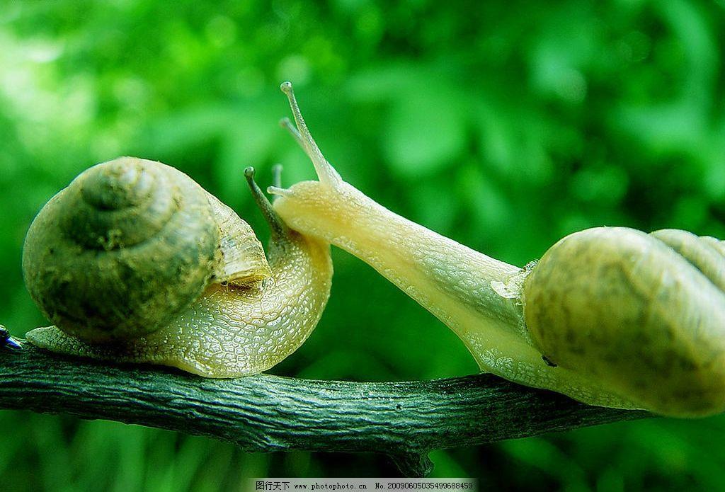 幼儿小班泥塑蜗牛