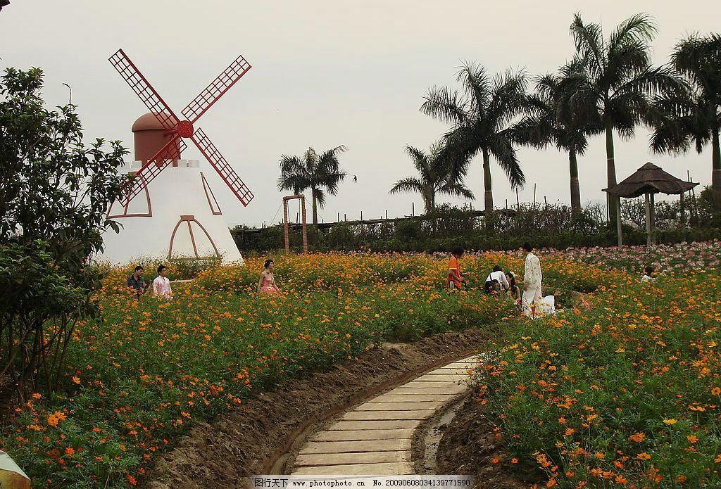 百万葵园 葵园 花海 广州 南沙 自然风景 旅游摄影 摄影图库 72dpi