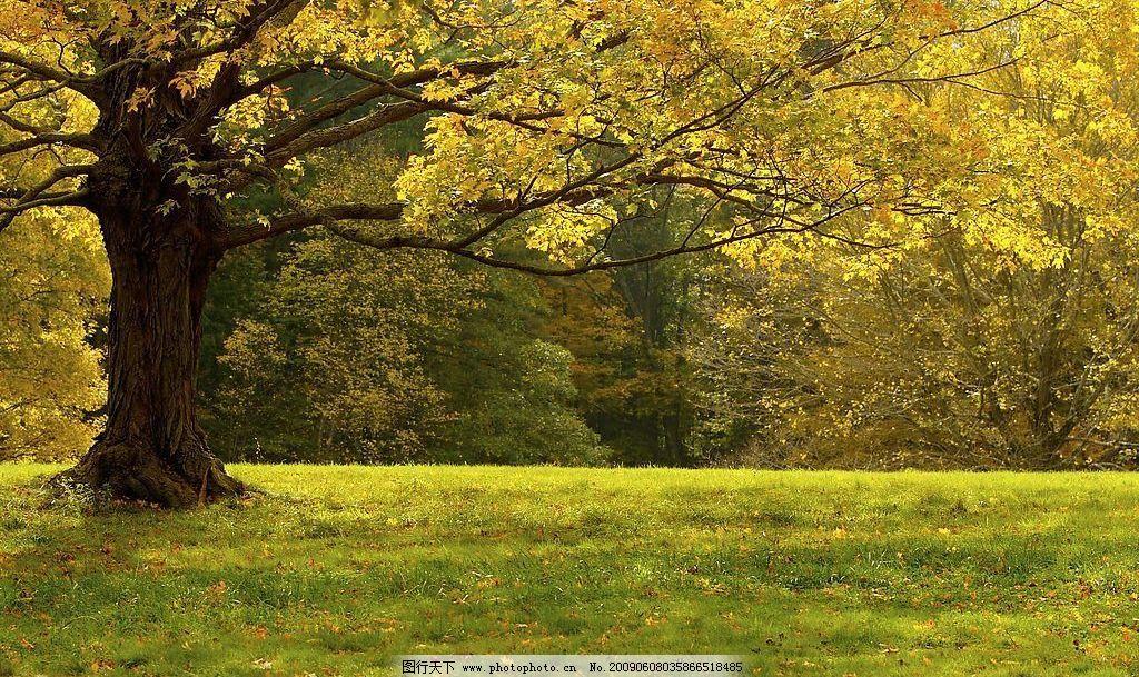 树林 大树 秋天 生物世界 树木树叶 摄影图库 300dpi jpg