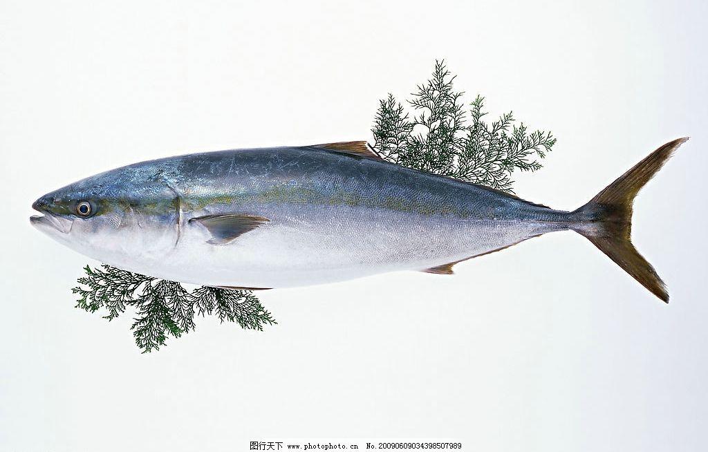 海鱼 鱼头 海鲜 鱼肉 鱼草 高清图片素材 餐饮美食 食物原料
