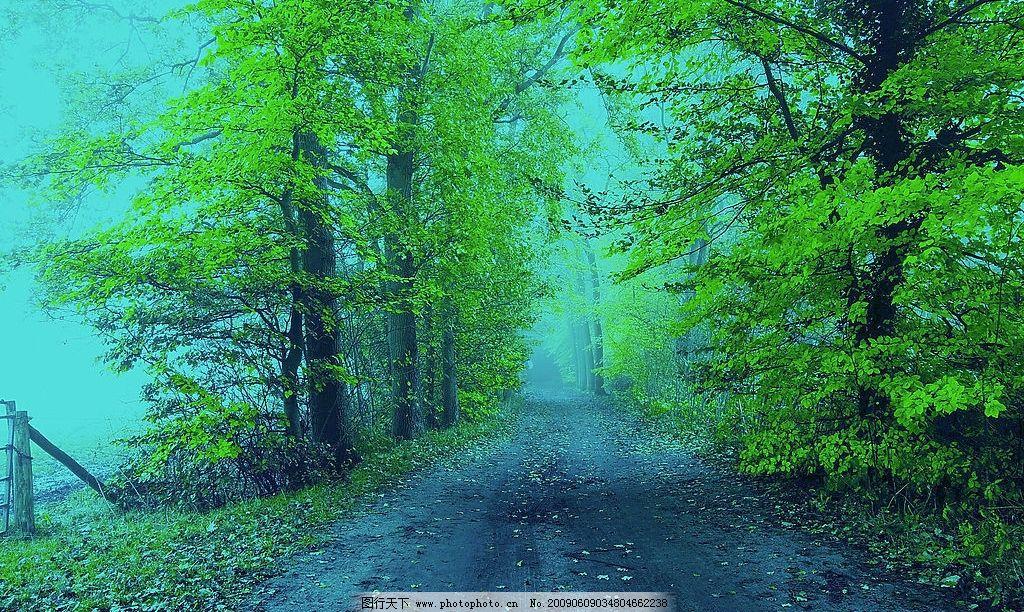 绿林 路 树林 绿叶 奇幻 魔幻 自然景观 自然风景 摄影图库 300dpi jp