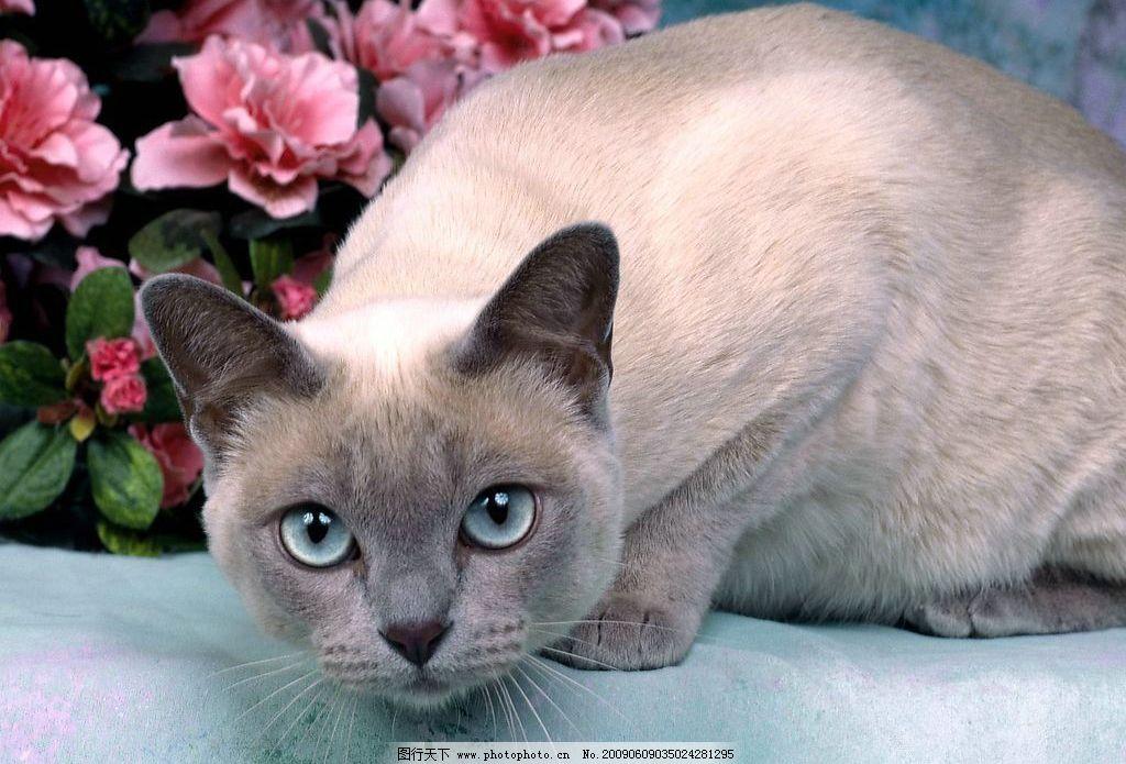 可爱的动物 可爱 野生动物 猫 生物世界 摄影图库 72dpi jpg