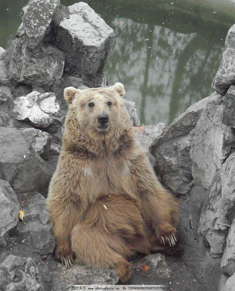 狗熊 石头 其他 图片素材 摄影图库 72dpi jpg 生物世界 野生动物