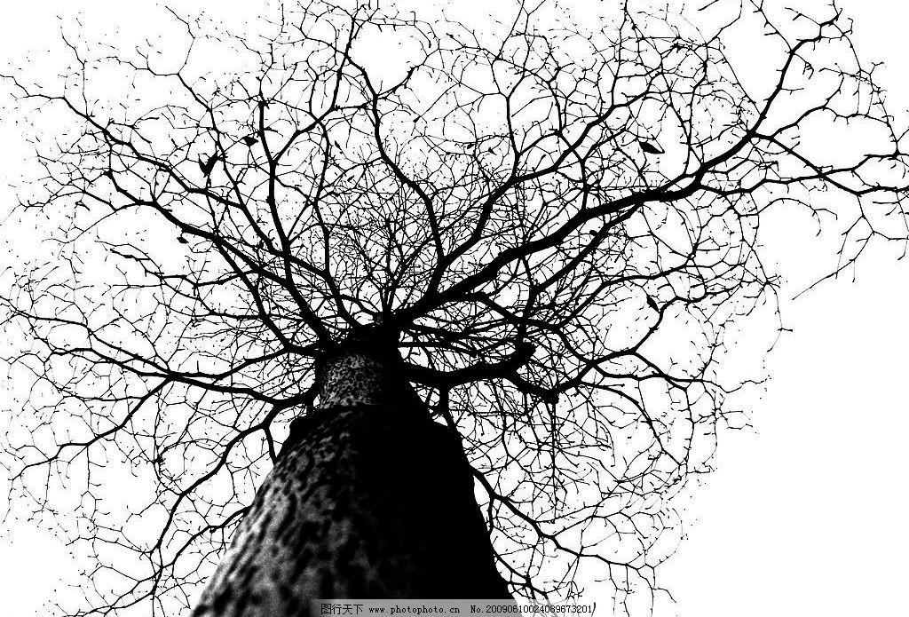 树枝 剪影 肌理 自然景观 自然风光 设计图库 314dpi jpg