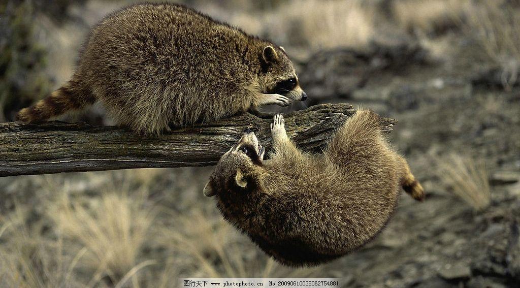 鼠类 动物 其他 图片素材 摄影图库 生物世界 野生动物