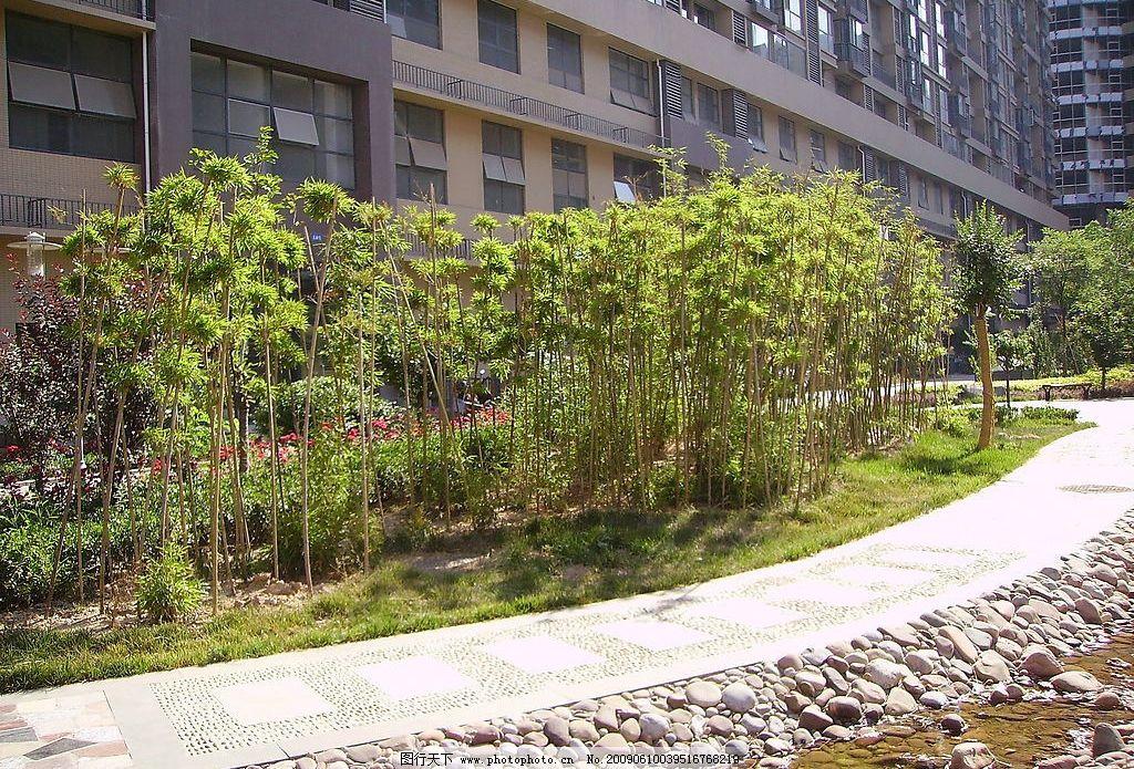 竹林风 竹子 竹林 小溪 绿色 园林小品 素材 建筑园林 园林建筑 摄影