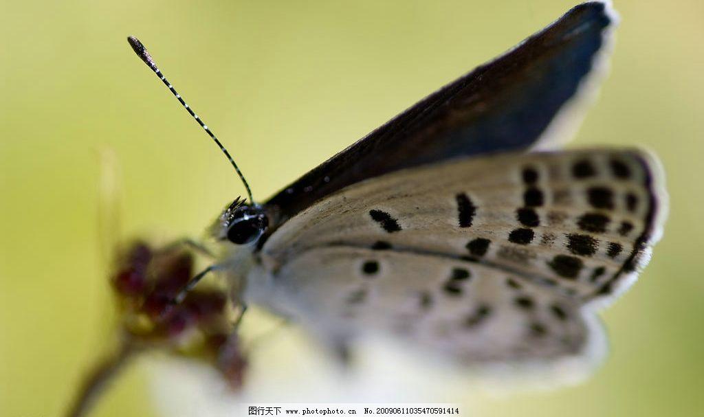 蝴蝶触角图片