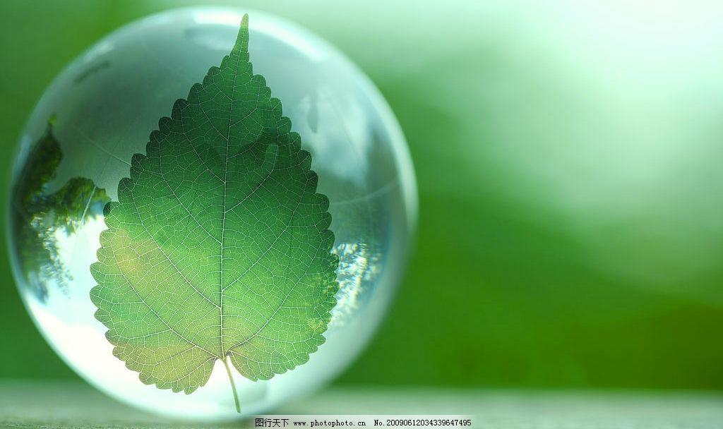 树叶 水晶球 水滴 自然景物 大自然图片 户外素材 风景素材 绿色素材