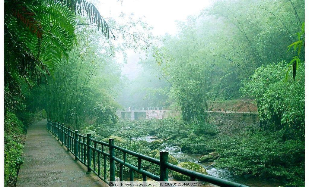 山涧竹林(摄影图jpg)图片