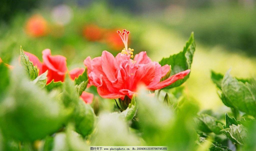 鲜花 二沙岛 绿叶 风景 自然 自然景观 其他 摄影图库 72dpi jpg