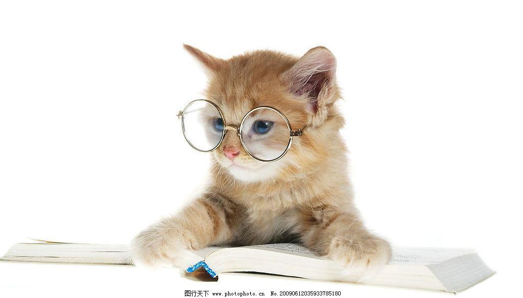 戴眼镜的猫图片