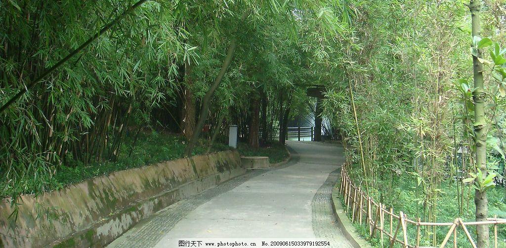竹林路 摄影 风景 竹林 路 篱笆 旅游摄影 国内旅游 摄影图库 72dpi