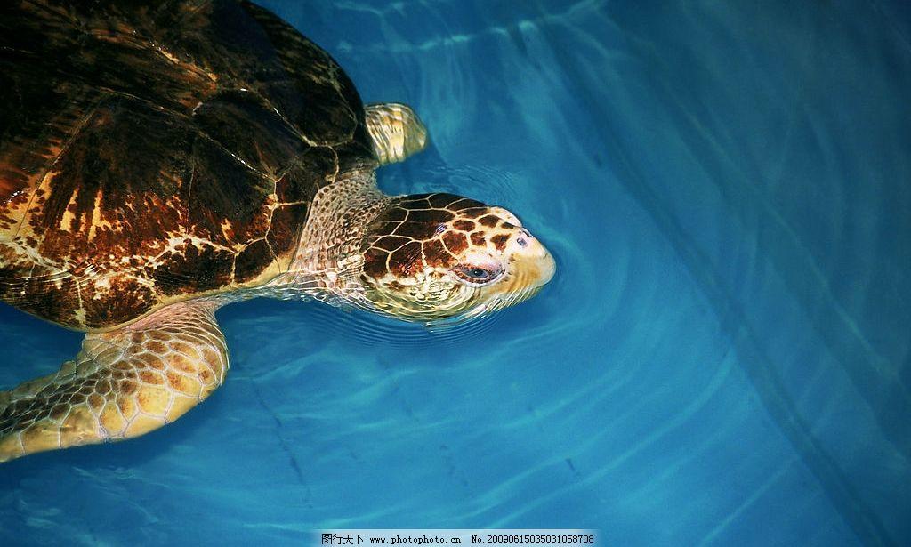 海龟 生物世界 野生动物 摄影图库