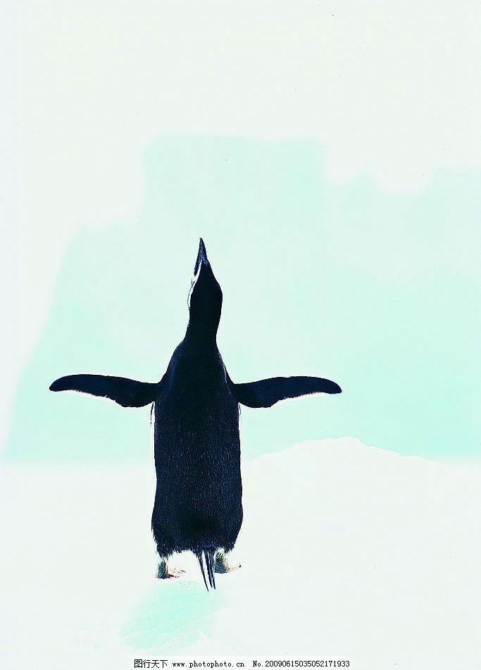 生物世界 动物 野生动物 海洋生物 摄影图库 冰山之企鹅篇 雪地 南极