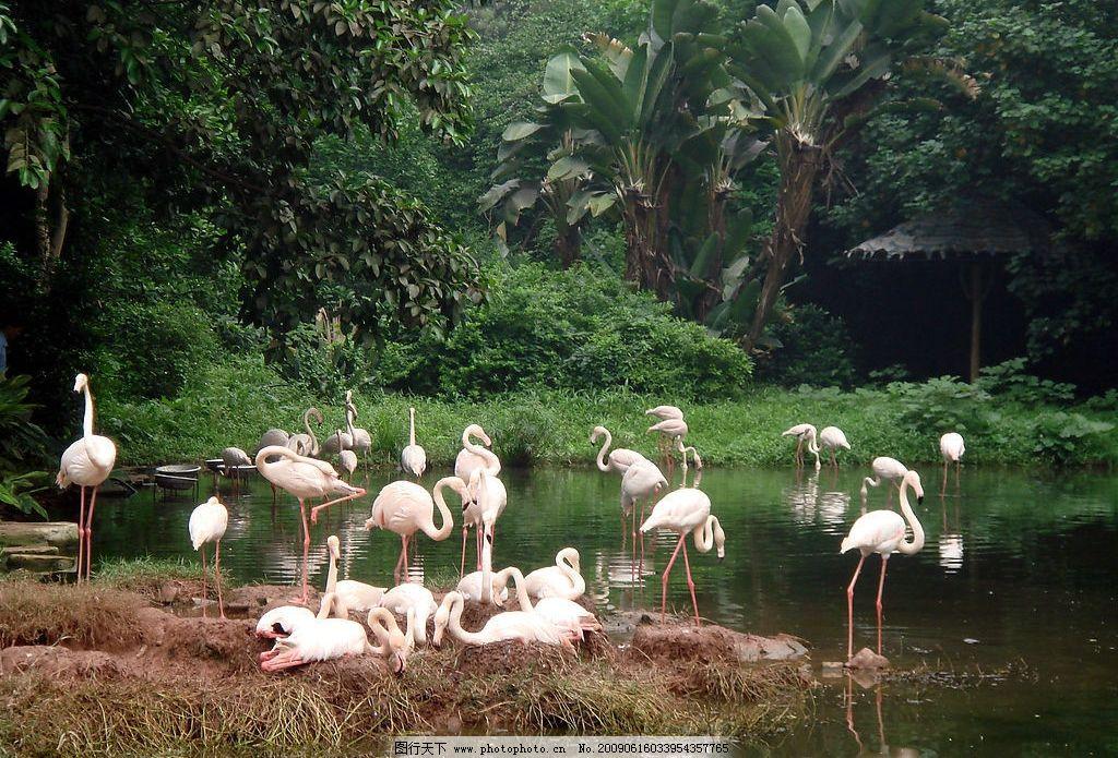 白鹤 广州动物园 园林 景 水 鹤群 树林 拍照 风景 悠闲 旅游摄影