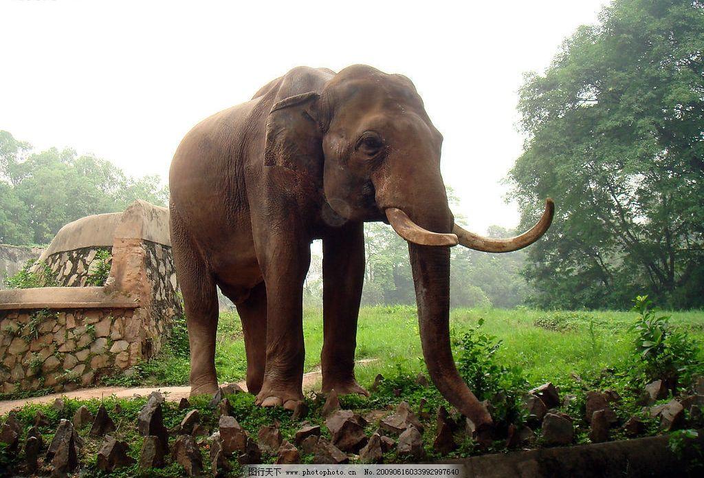大象 广州动物园 动物 拍照 绿地 旅游摄影 国内旅游 摄影图库 72dpi