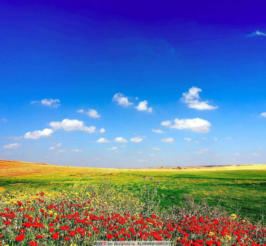 鲜艳花草 红花 绿地 蓝天 自然景观 自然风景 摄影图库 72dpi jpg