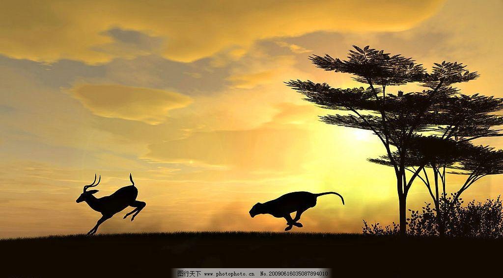 猛兽图片_野生动物_生物世界