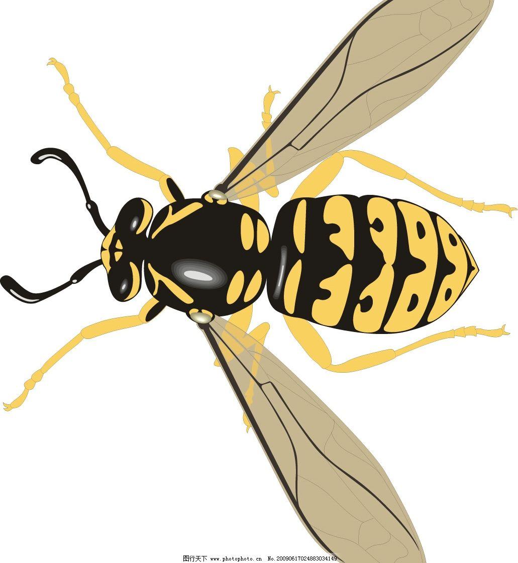 马蜂 蜜蜂 蜂 昆虫 生物世界 矢量图库 wmf