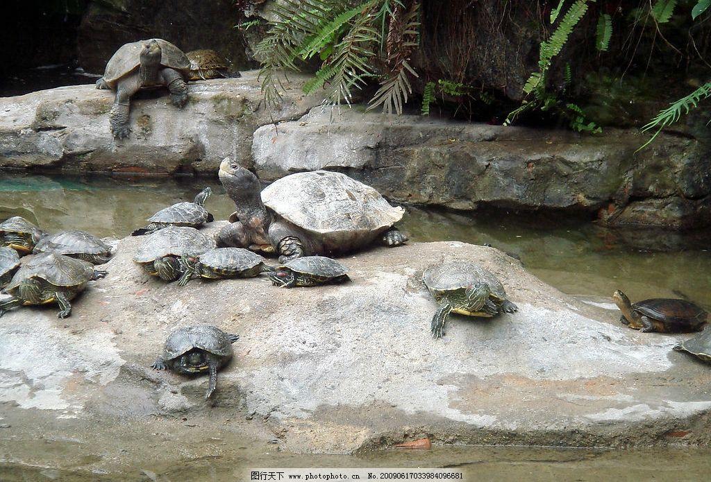 乌龟 广州动物园 动物 石头 水 龟群 拍照 游玩 旅游摄影 国内旅游