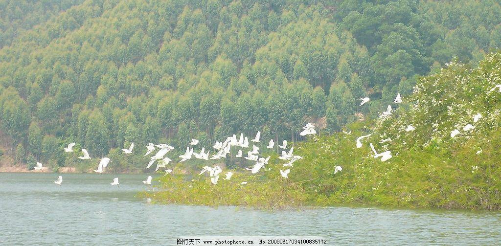 起飞 小鸟 白鹤 高山 湖泊 湖光山色 qq怎么弄指定红包 鸟类 树林 树丛