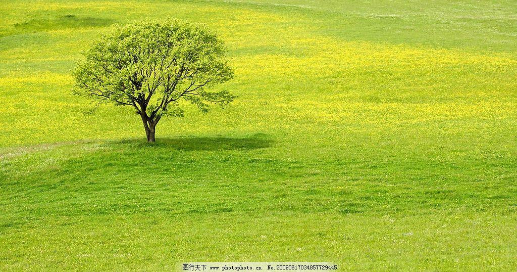 绿色清新广阔风景壁纸