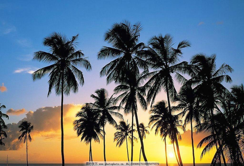 三亚 海南 风景 海滩 椰子树 旅游 休闲 自然景观 自然风景 摄影图库