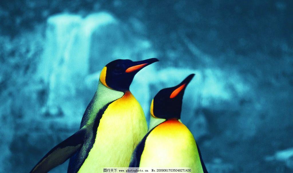 企鹅 冰川 生物世界 野生动物 摄影图库 300dpi jpg