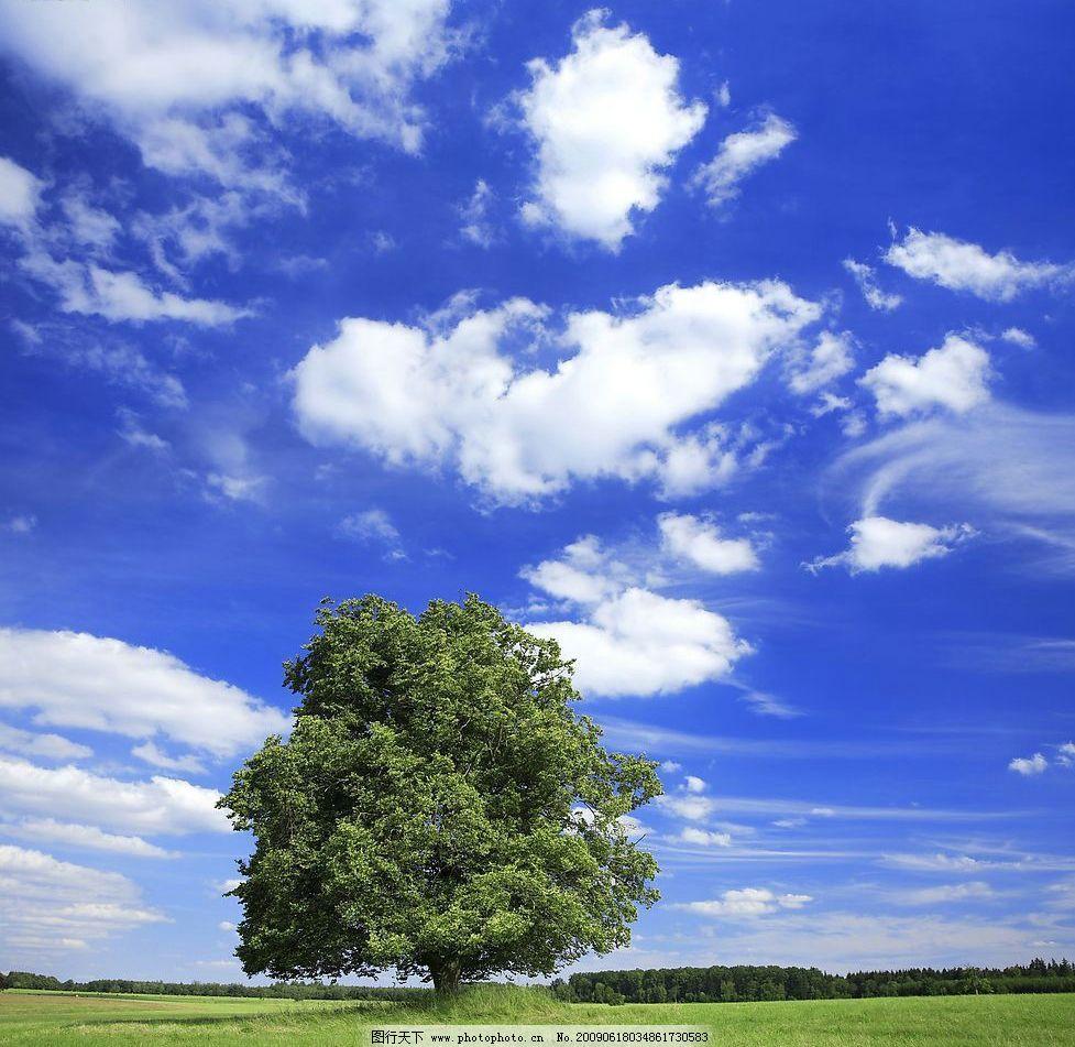 蓝天 白云 天高云淡 云 树 一棵树 自然景观 自然风景 摄影图库 300