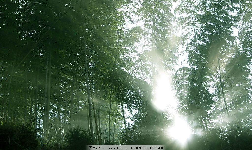 竹林晨光图片,竹子 风景 风光 高清图片 光线 绿色-图