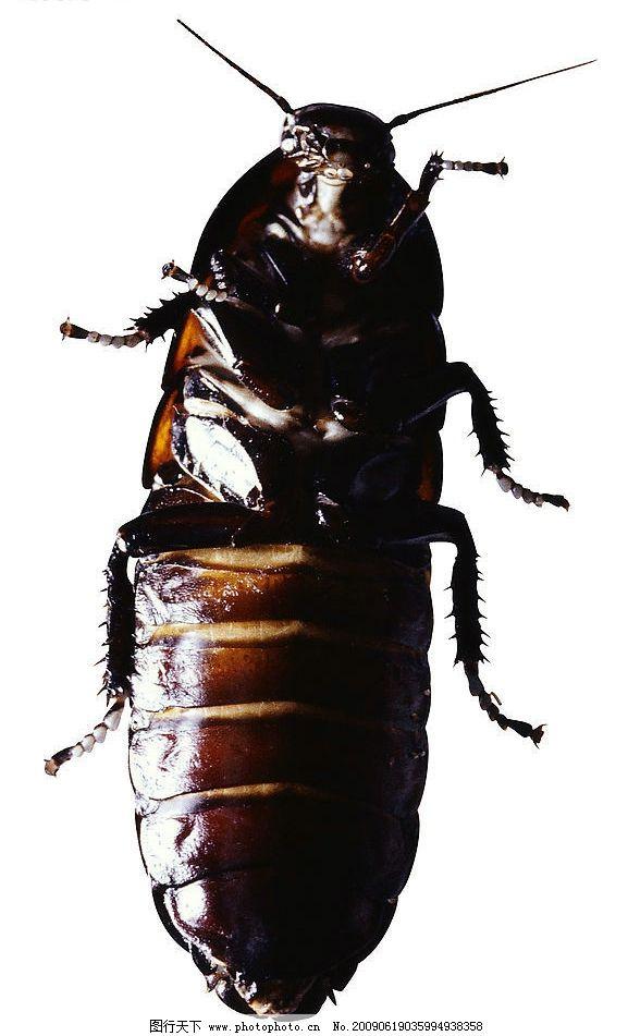 昆虫素材图片_家禽家畜