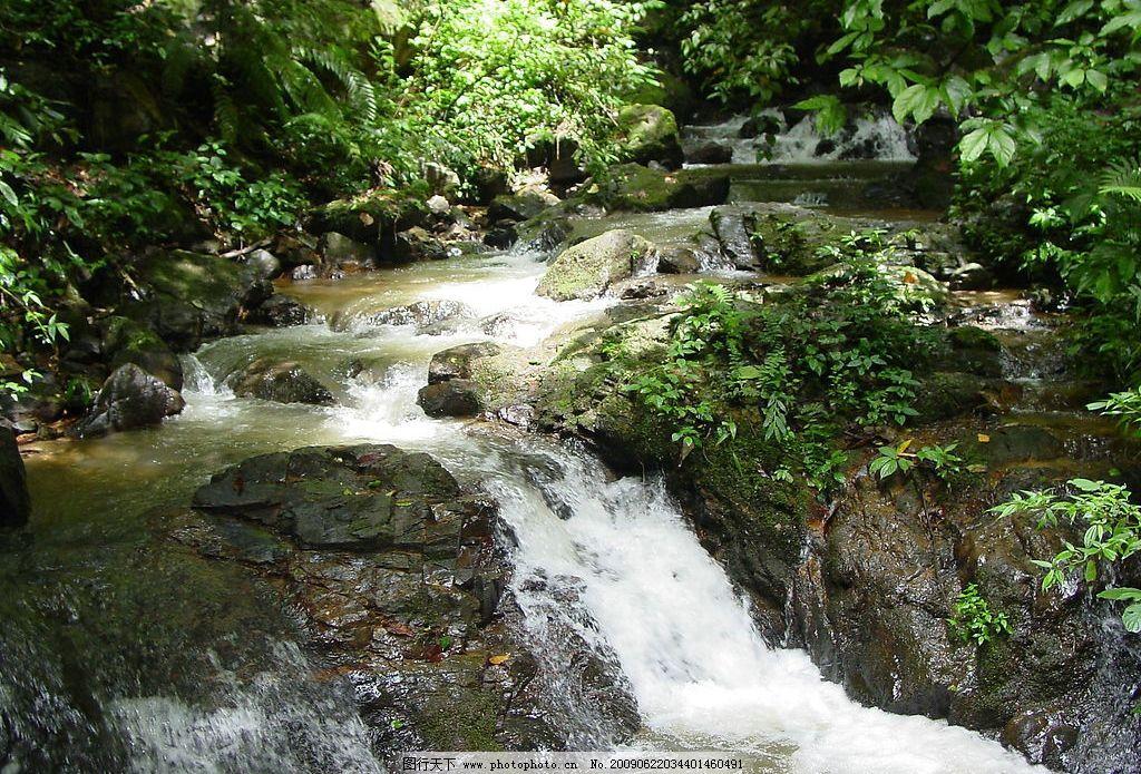 森林中的小溪图片