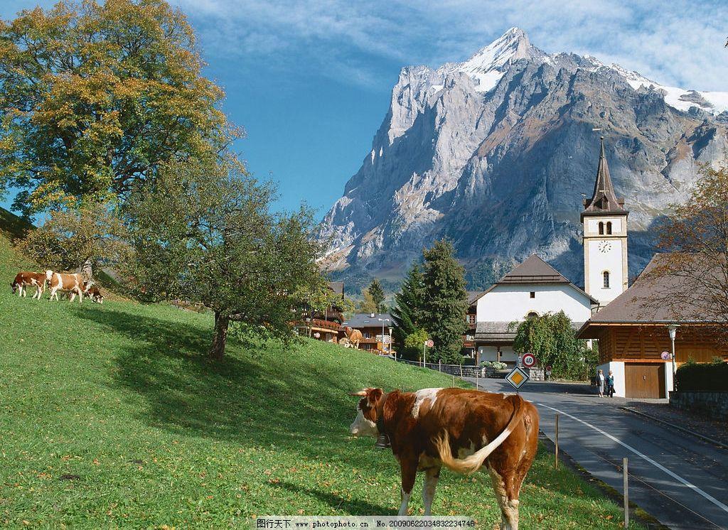 欧洲风景 牛树 草坪 房子 公路 蓝天 白云 高山 自然景观