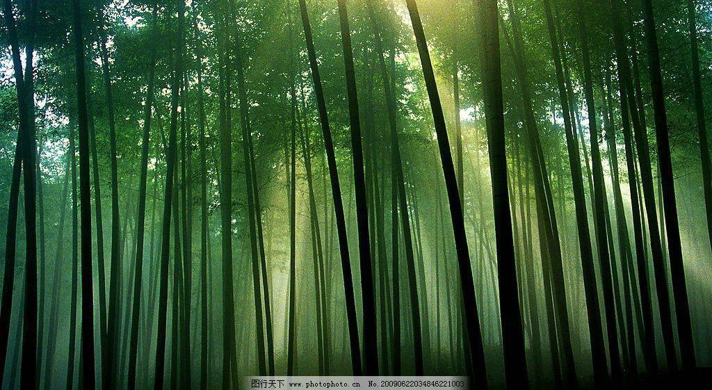 高清图片绿色竹子,竹林 雾林 呼吸绿色 阳光 背景-图