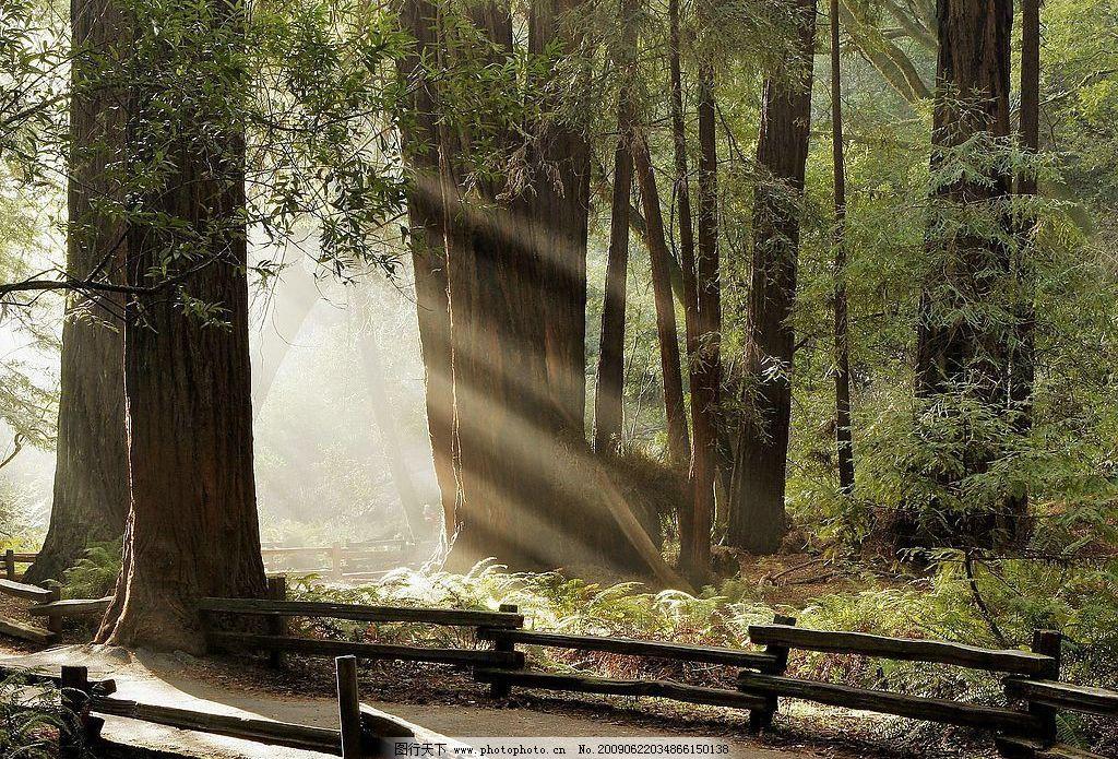 晨光 阳光 树林 自然景观 自然风景 摄影图库 72dpi jpg 早晨阳光