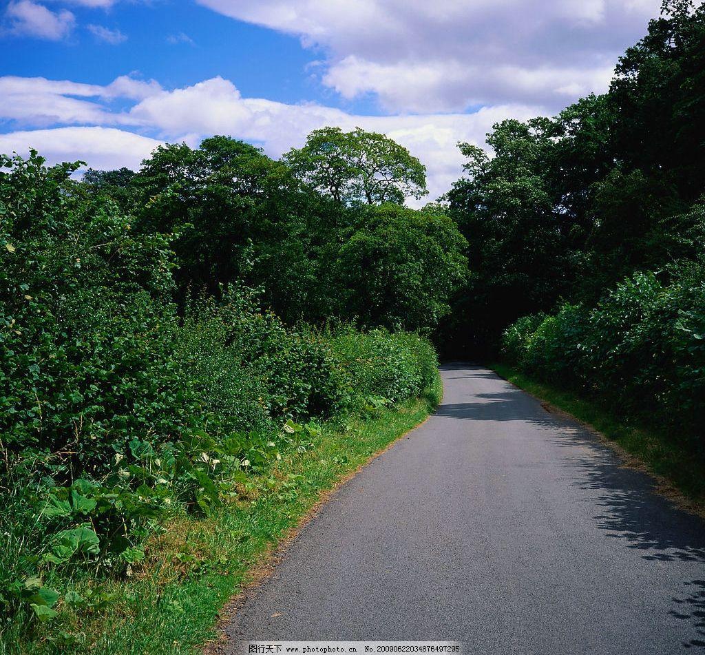 林荫小路 树林 树 小路 景色 蓝天 白云 自然景观 自然风景 摄影图库