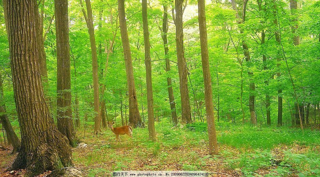 大树林 美丽风景 树木 树林 森林 植物 自然景观 自然风景 摄影图库