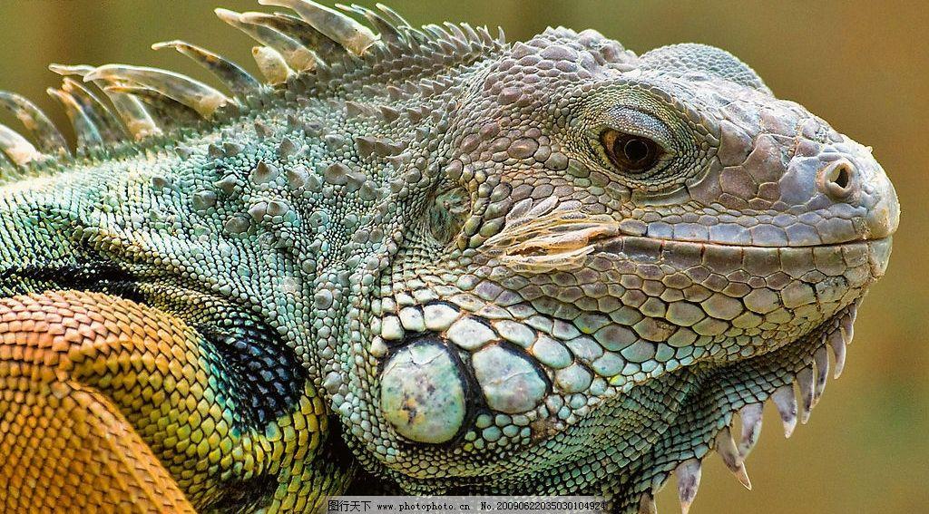变色龙 动物 高清 摄影 自然 生态 环保 生物世界 野生动物 摄影图库
