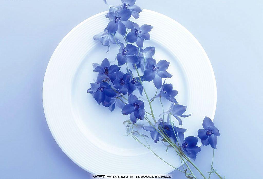 花草背景 花朵 花纹 背景 线条 底纹 花草 盘子 叶子 生物世界 摄影图