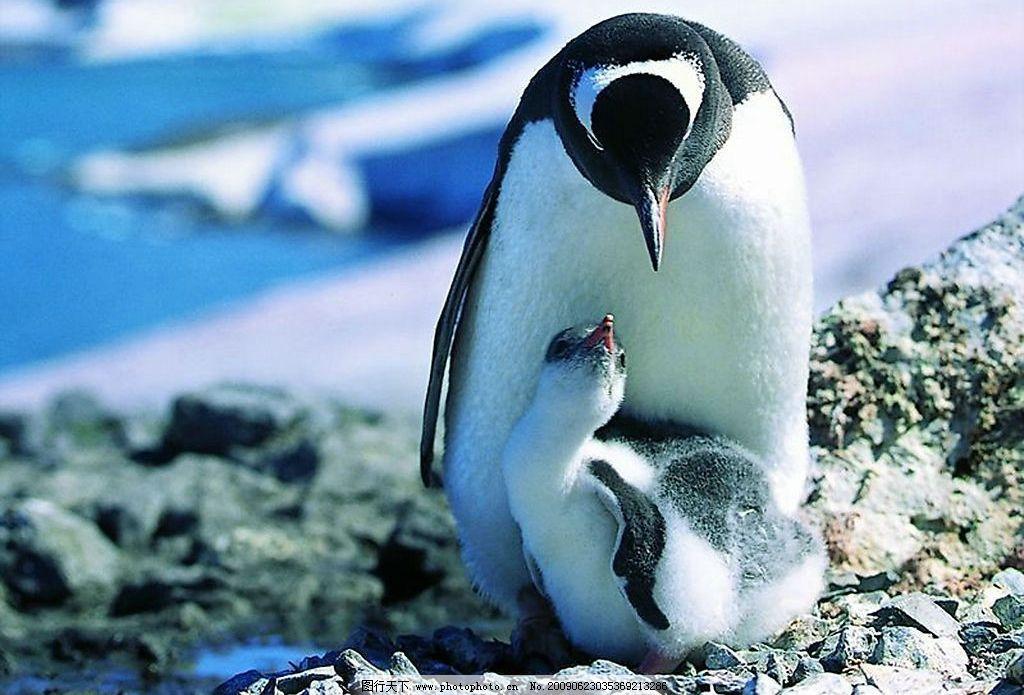 壁纸 动物 企鹅 1024_695